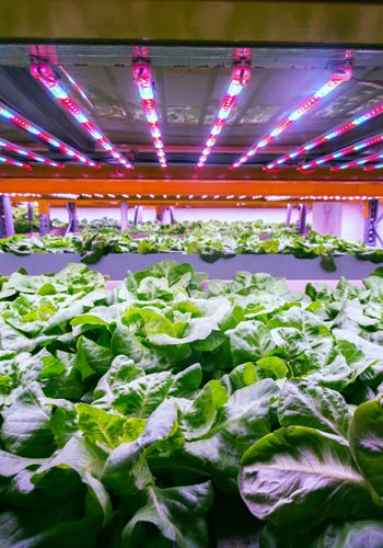 Hydroponics Systems From Simply Hydro Buy Online And Save Now
